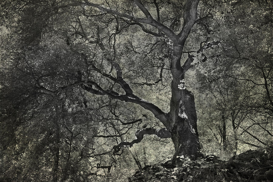 Trees Photograph - Grabbing by Laurie Search
