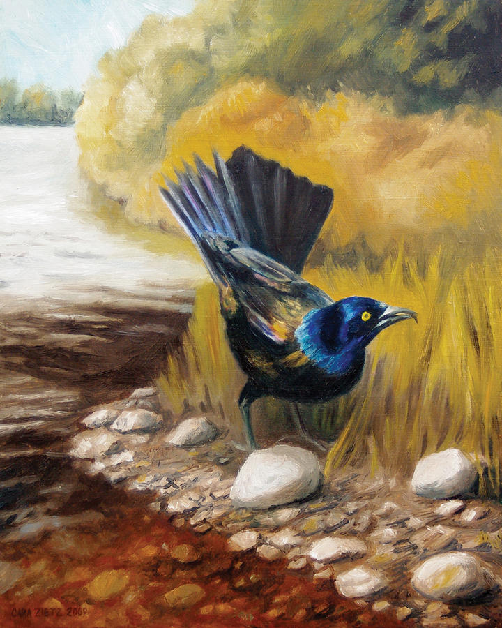 Grackle Painting  - Grackle Fine Art Print