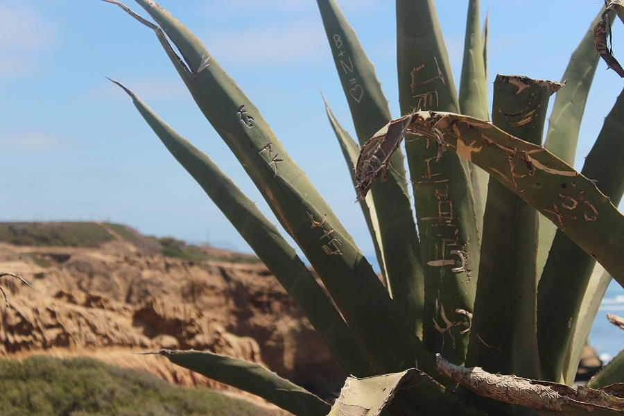 Graffiti Cactus Photograph