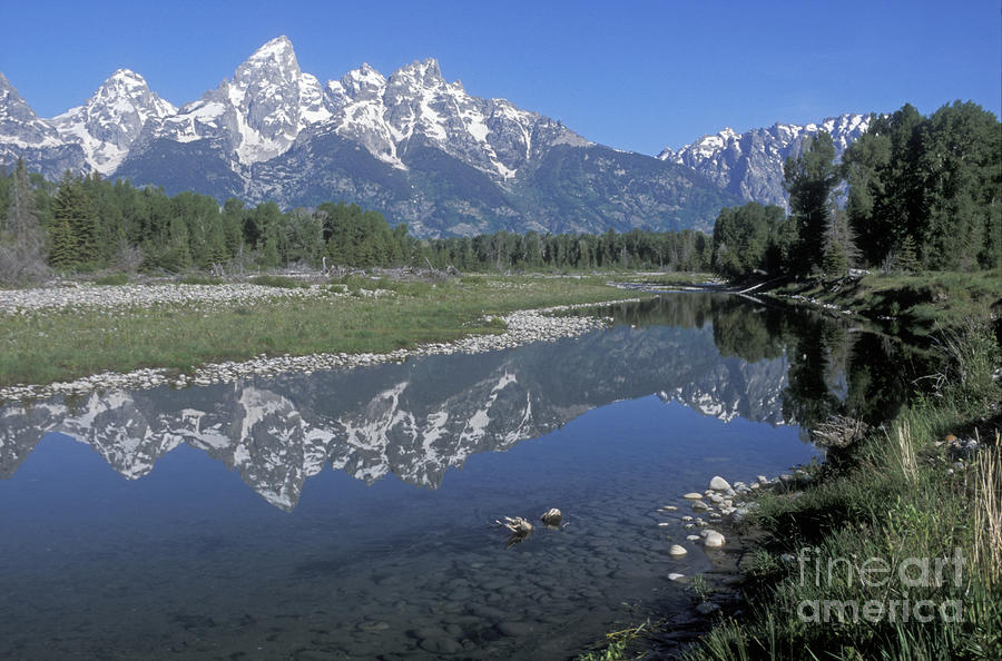 Grand Teton Reflection At Schwabacher Landing Photograph  - Grand Teton Reflection At Schwabacher Landing Fine Art Print
