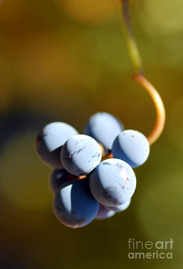 Grape Photograph