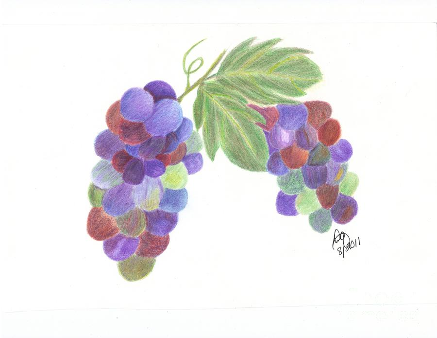 Grapes Drawing - Grapes by DebiJeen Pencils