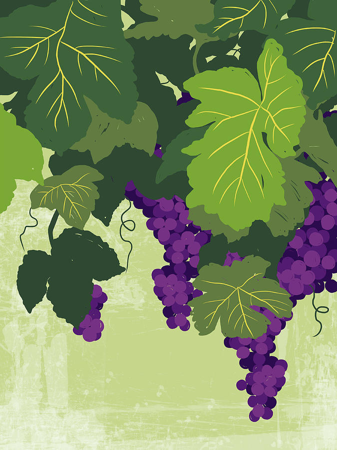 Graphic Illustration Of Wine Grapes On The Vine Digital Art  - Graphic Illustration Of Wine Grapes On The Vine Fine Art Print