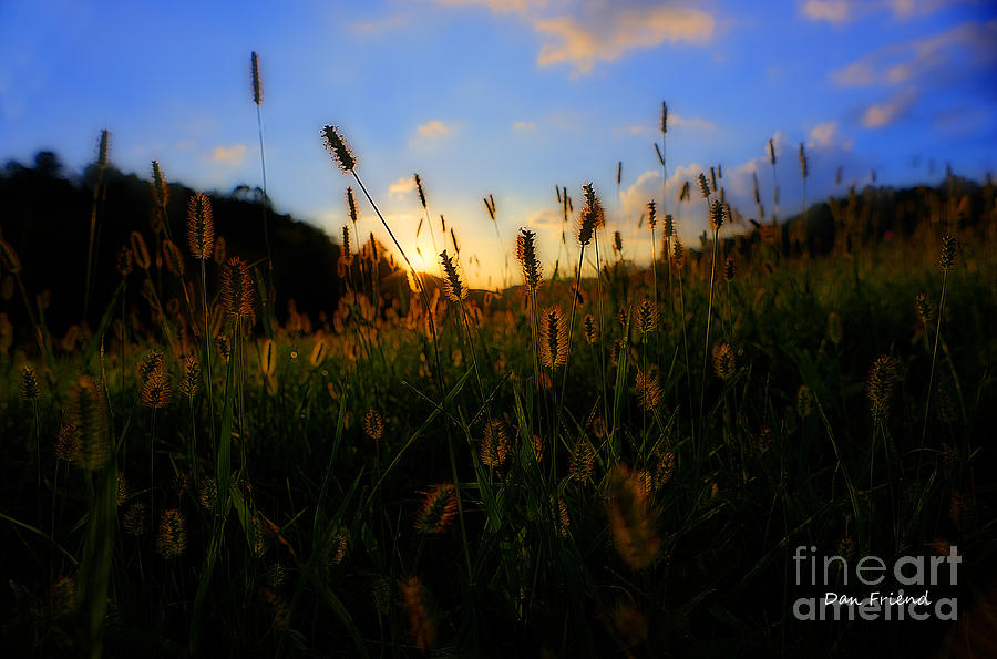Grass Photograph - Grass In Field At Sunset by Dan Friend
