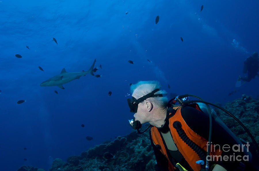 English Reef Photograph - Gray Reef Shark With Diver, Papua New by Steve Jones