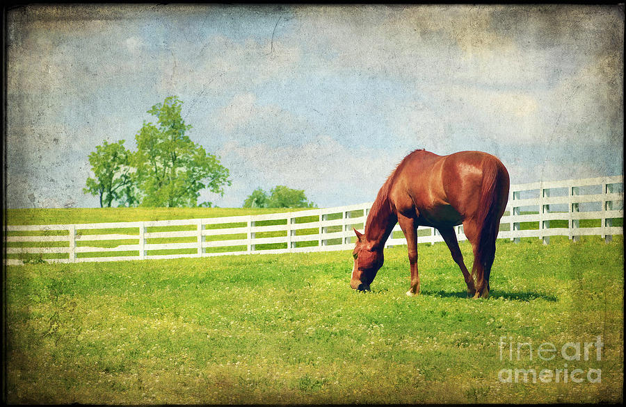 Grazing Photograph  - Grazing Fine Art Print