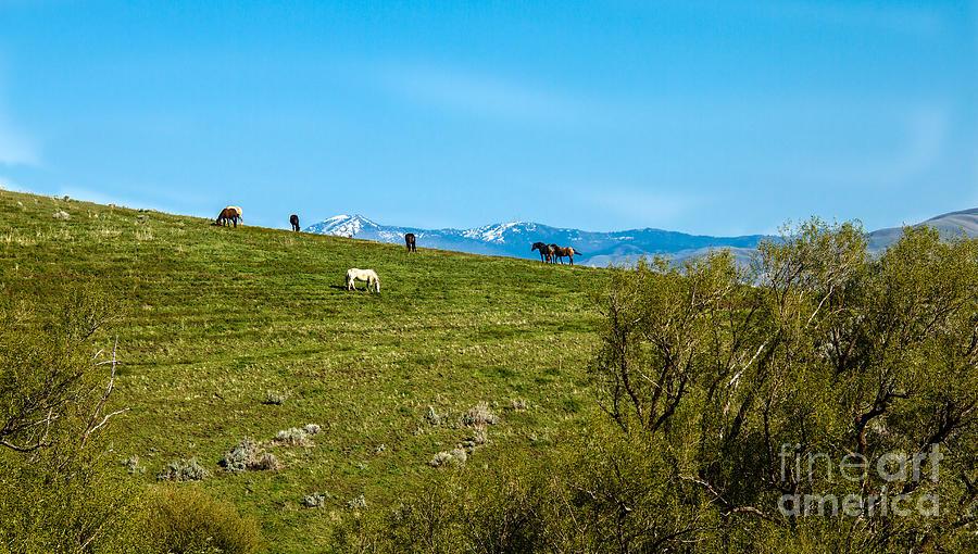 Range Land Photograph - Grazing Horses by Robert Bales