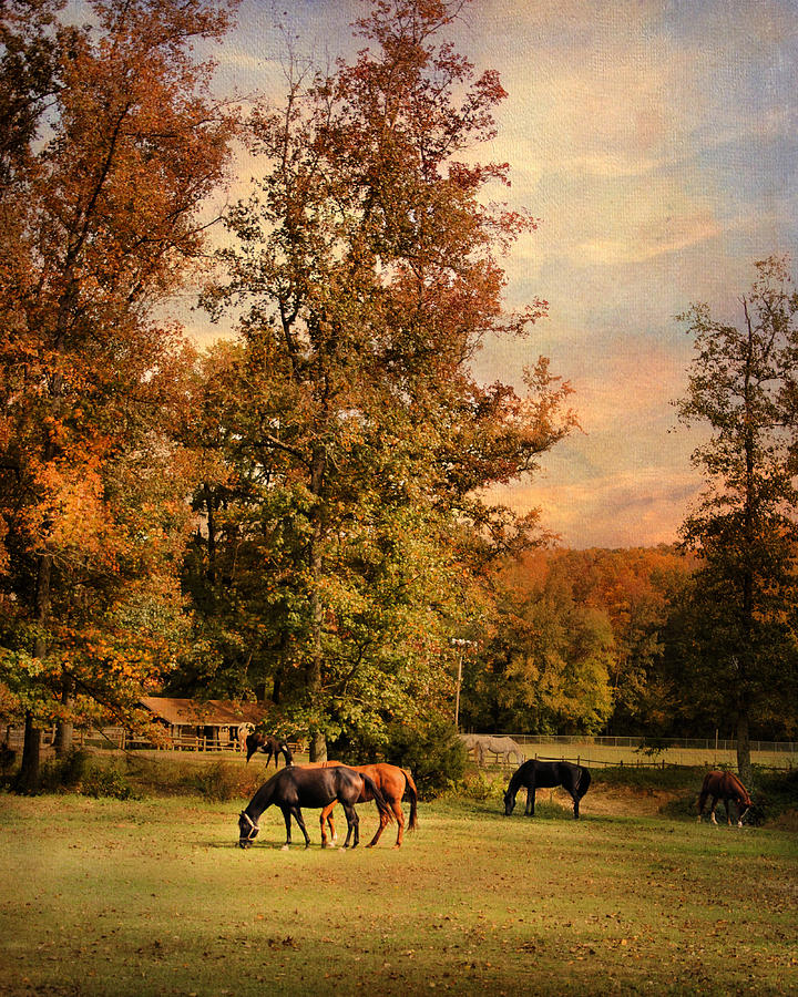 Grazing In Autumn Photograph