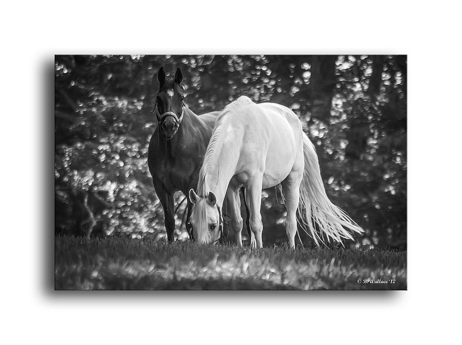 2d Photograph - Grazing In Black And White by Brian Wallace