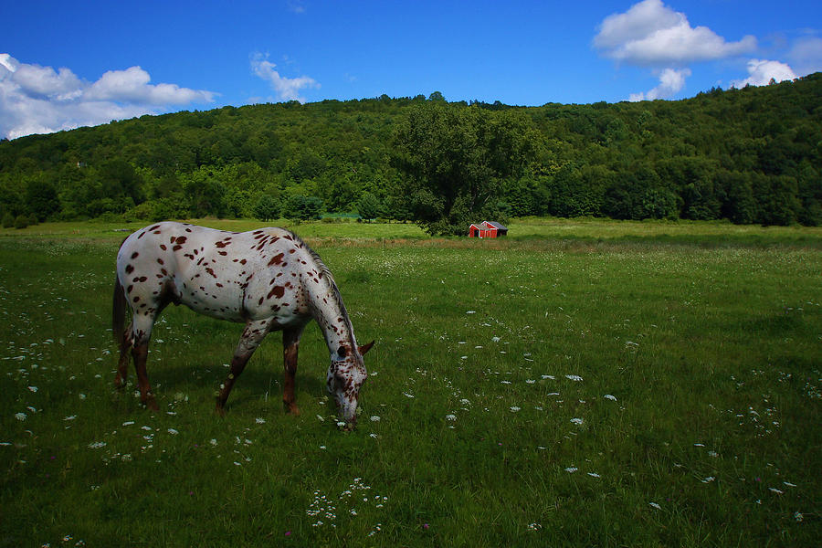 Grazing Photograph
