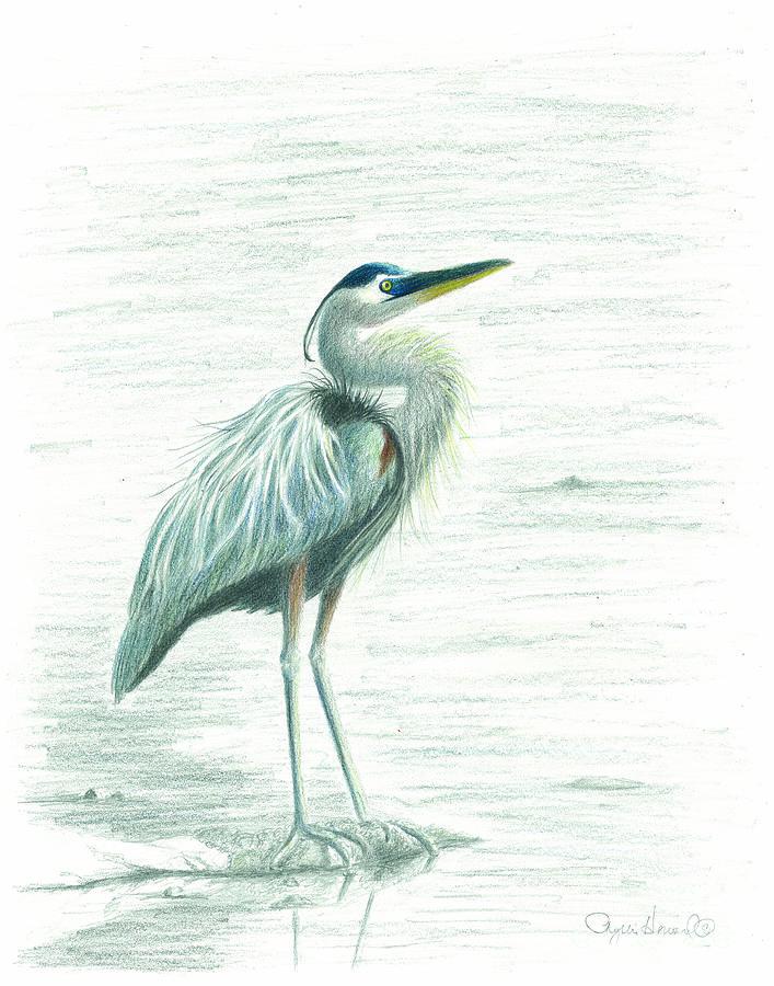 Similiar Great Blue Heron Clip Art Keywords