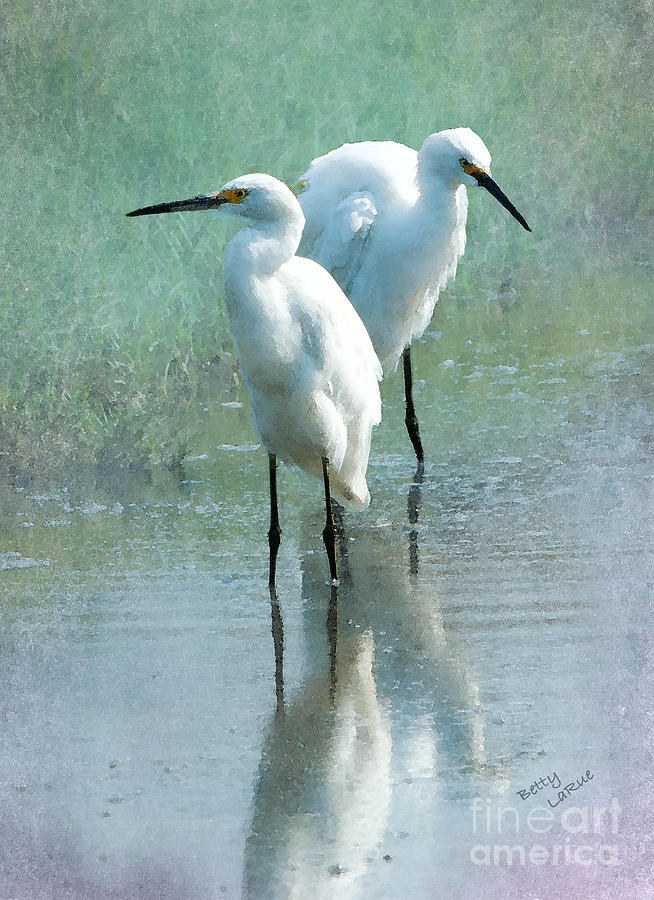 Great Egrets Photograph