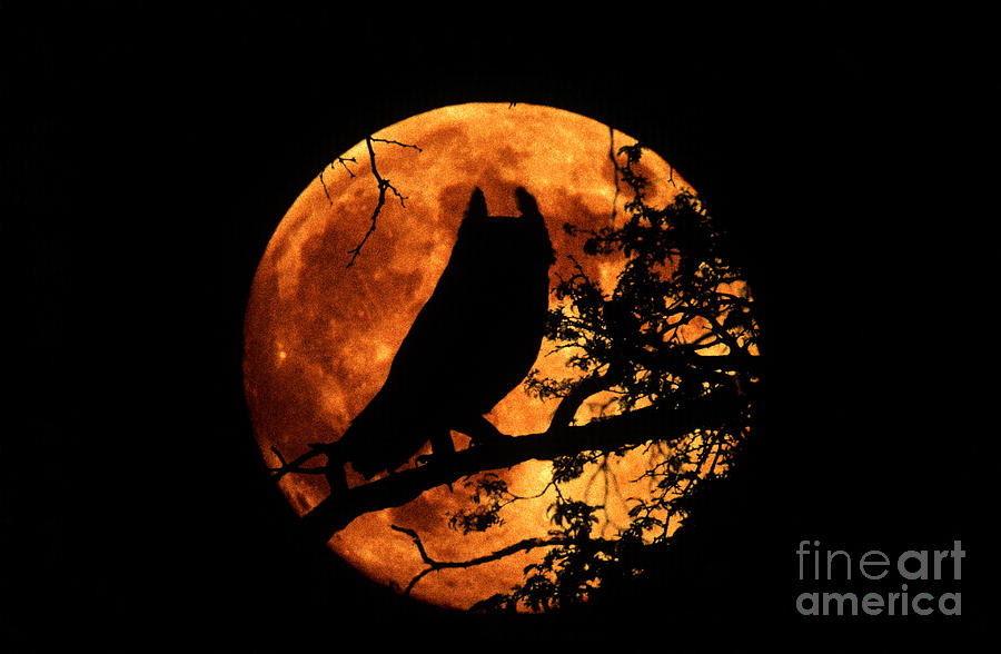 Great Horned Owl And Moon Photograph