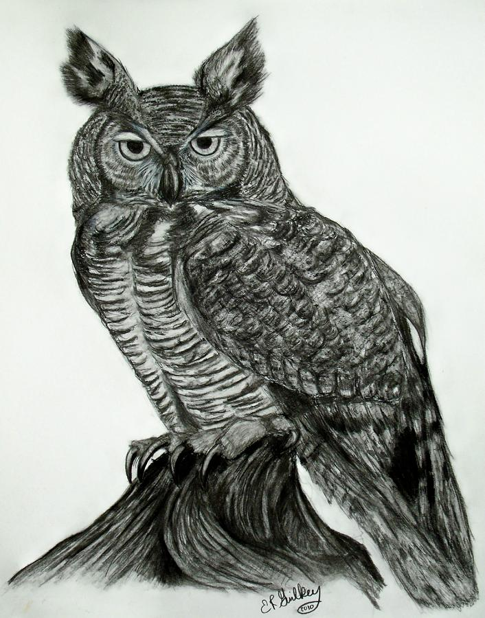 Great Horned Owl Drawing  - Great Horned Owl Fine Art Print