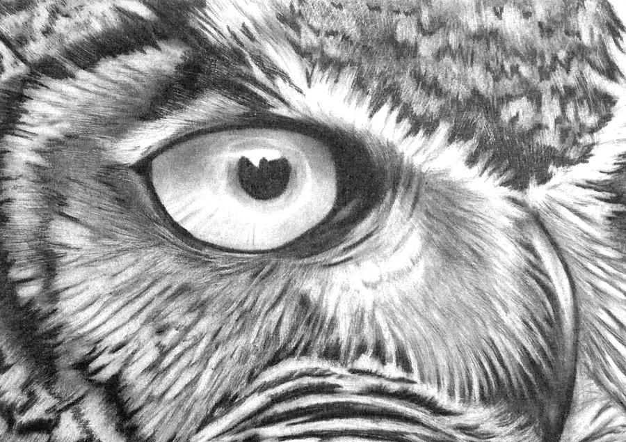 how to draw a great horned owl