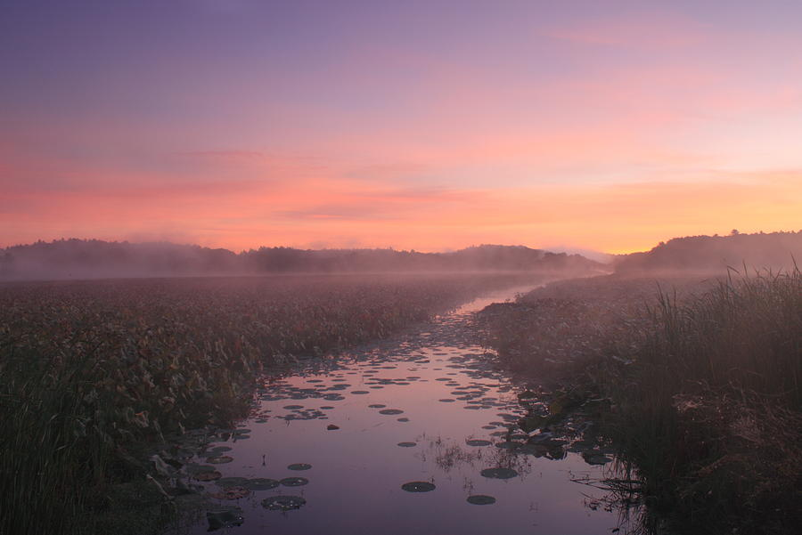 Concord Photograph - Great Meadows National Wildlife Refuge Dawn by John Burk
