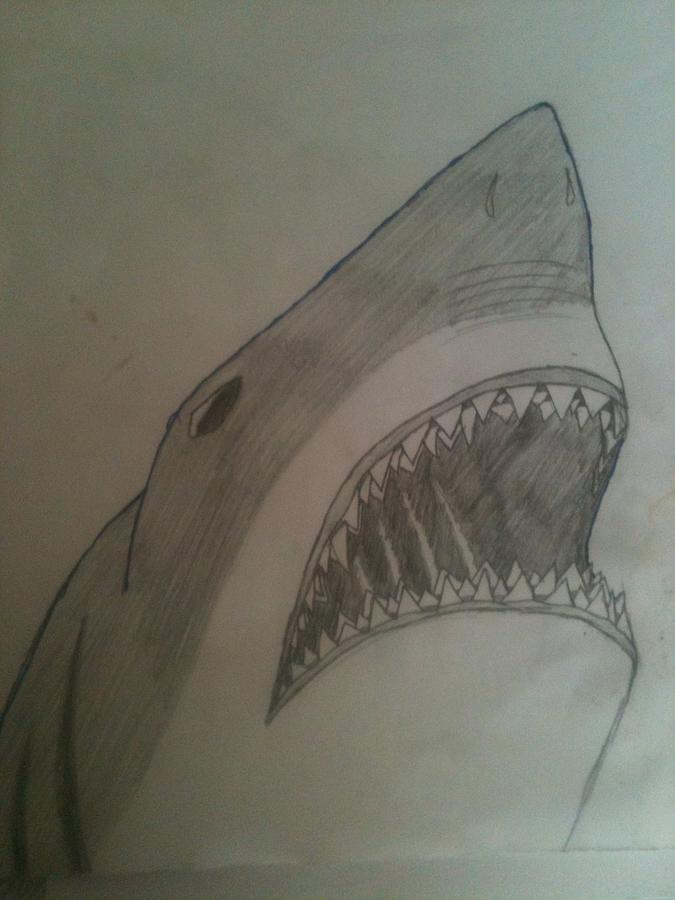 Great white shark by elise parr