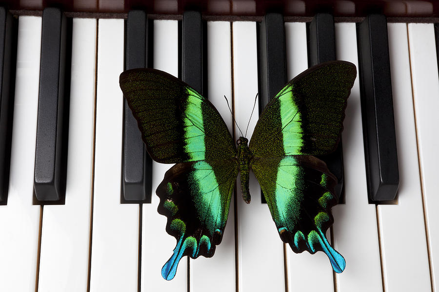 Green And Black Butterfly On Piano Keys Photograph