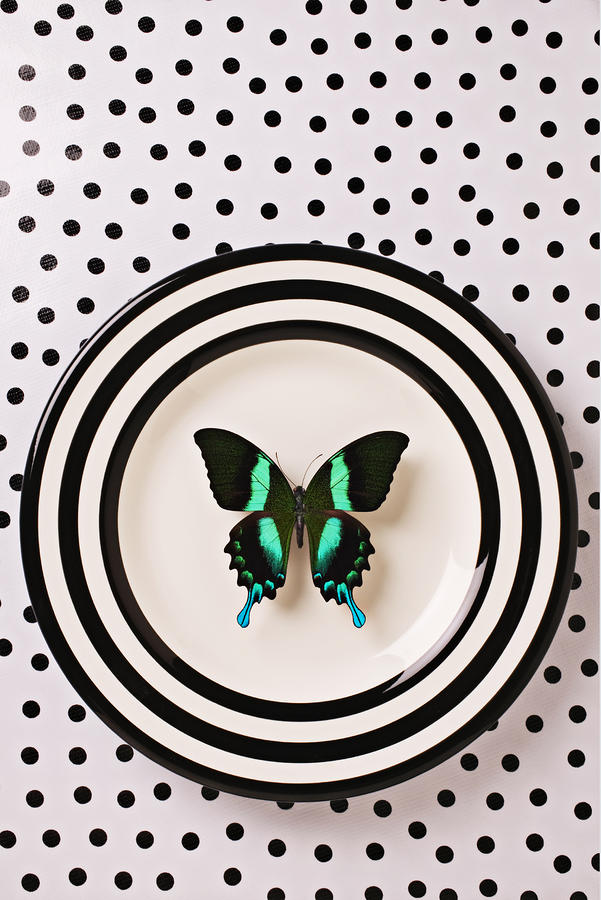 Green And Black Butterfly On Plate Photograph