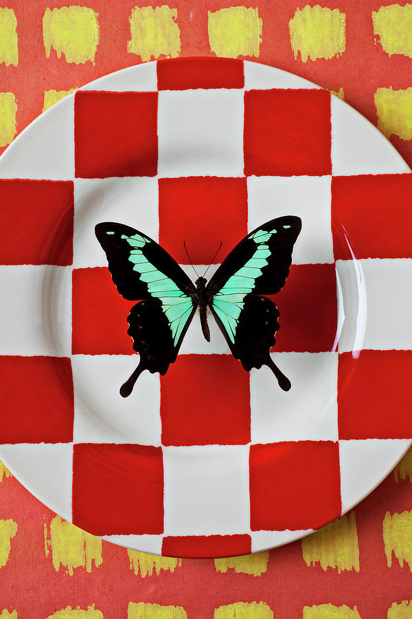 Green And Black Butterfly On Red Checker Plate Photograph