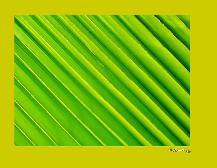 abstract yellow green drawing - photo #15