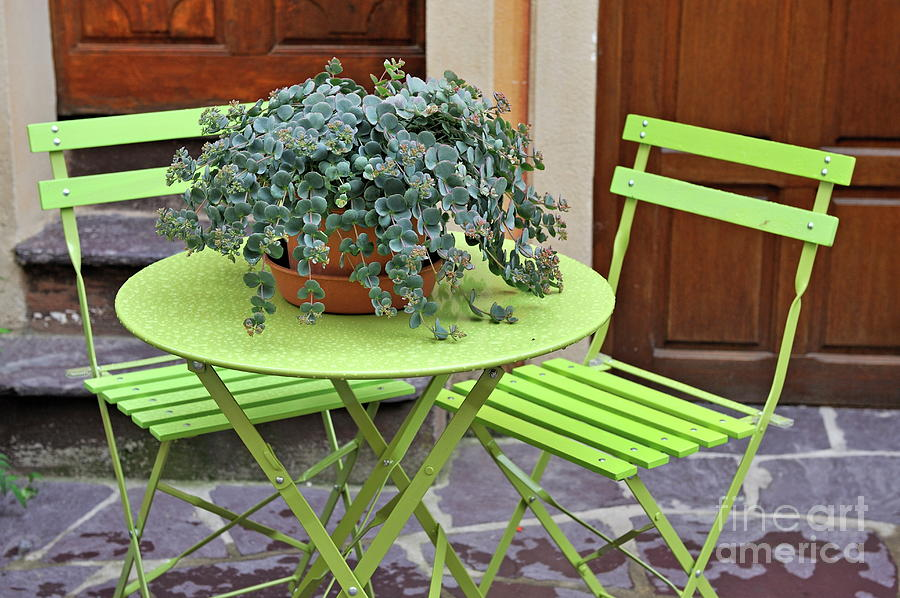 Green Chairs And Table With Plant In Pot Photograph