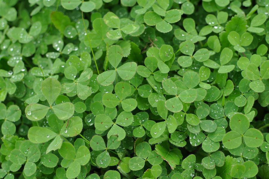 green clover wallpaper - photo #17