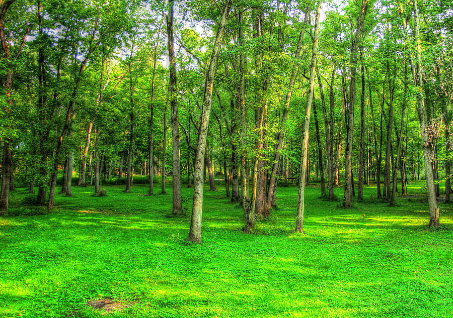 Green Floored Forest Photograph  - Green Floored Forest Fine Art Print