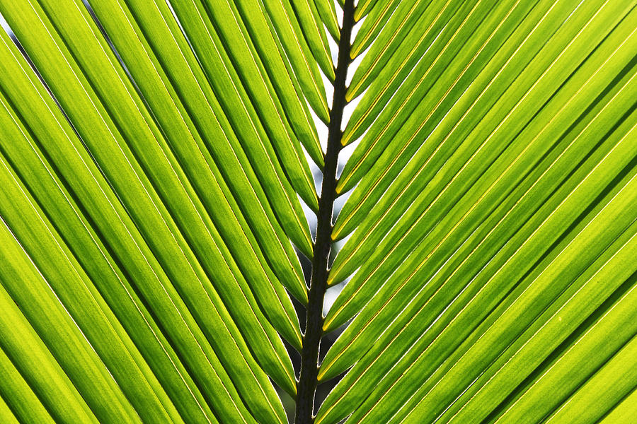 Green Fronds Photograph  - Green Fronds Fine Art Print