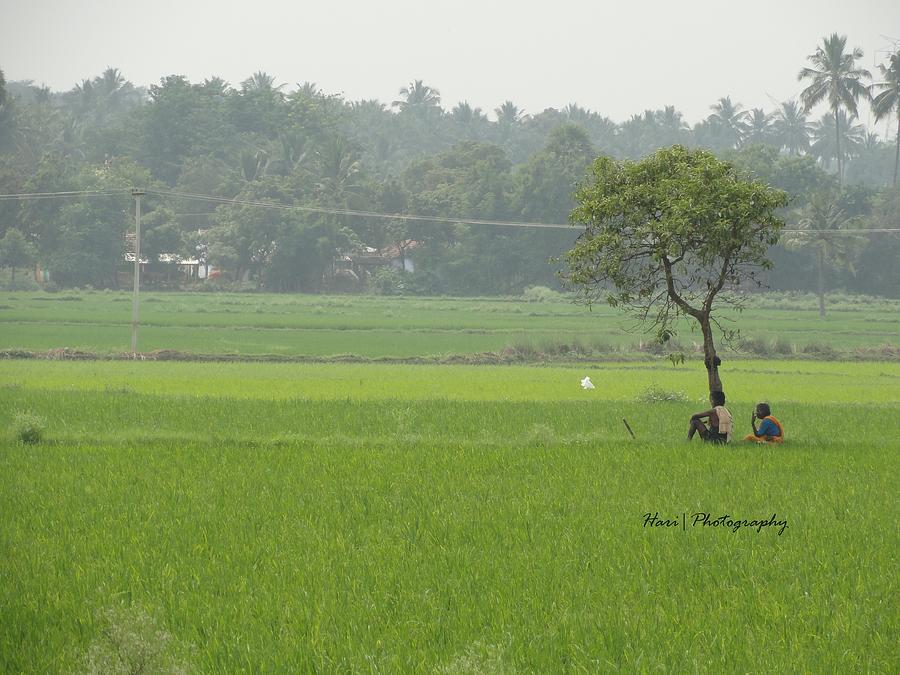 Green  Photograph - Green by Hari Ram