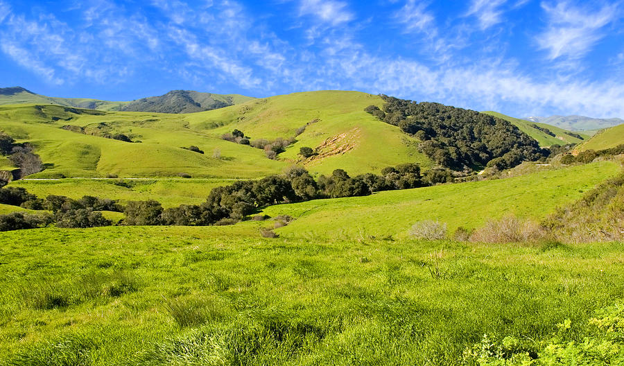 Green Meadow Santa Ynez Valley Ca Photograph