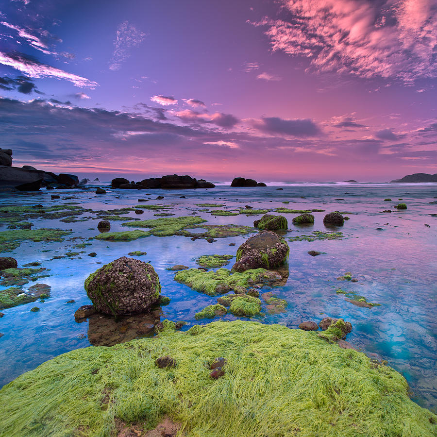 Green Moss Covered Rocks At Sunrise Photograph
