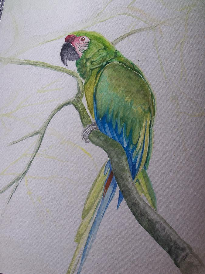 Green parrot painting - photo#7