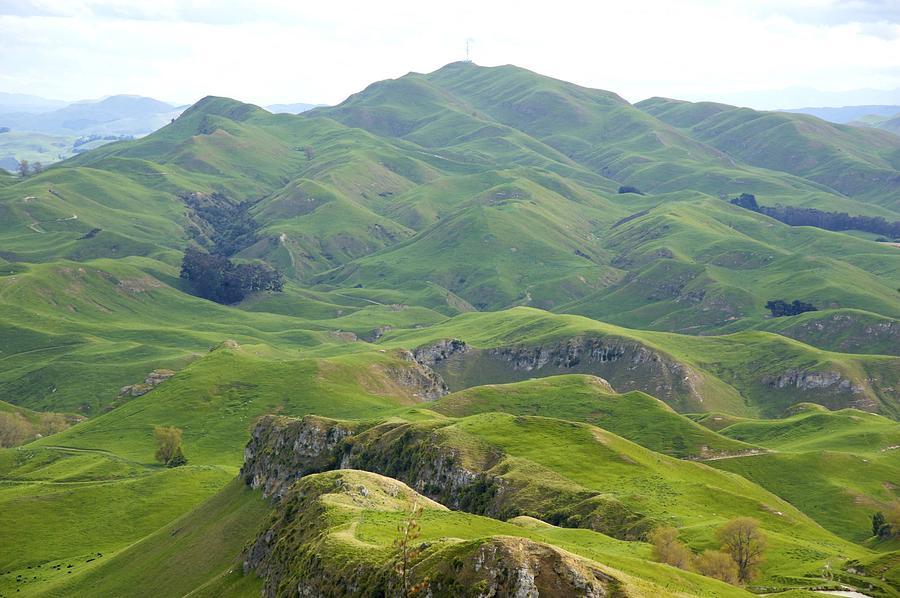 Green Rolling Hills by Joyce Sherwin