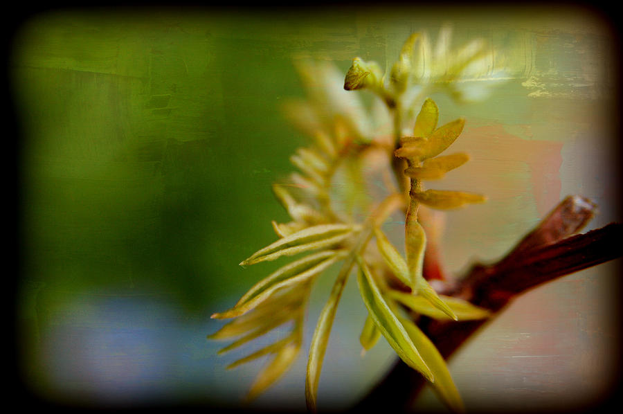 Greeness Photograph  - Greeness Fine Art Print