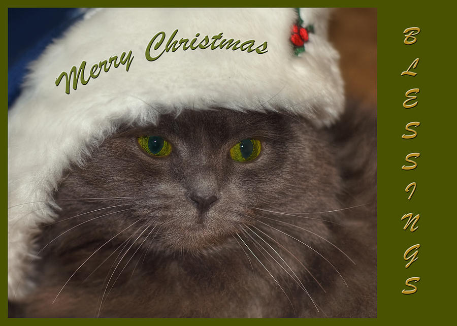 Grey Cat Santa 2 Photograph  - Grey Cat Santa 2 Fine Art Print