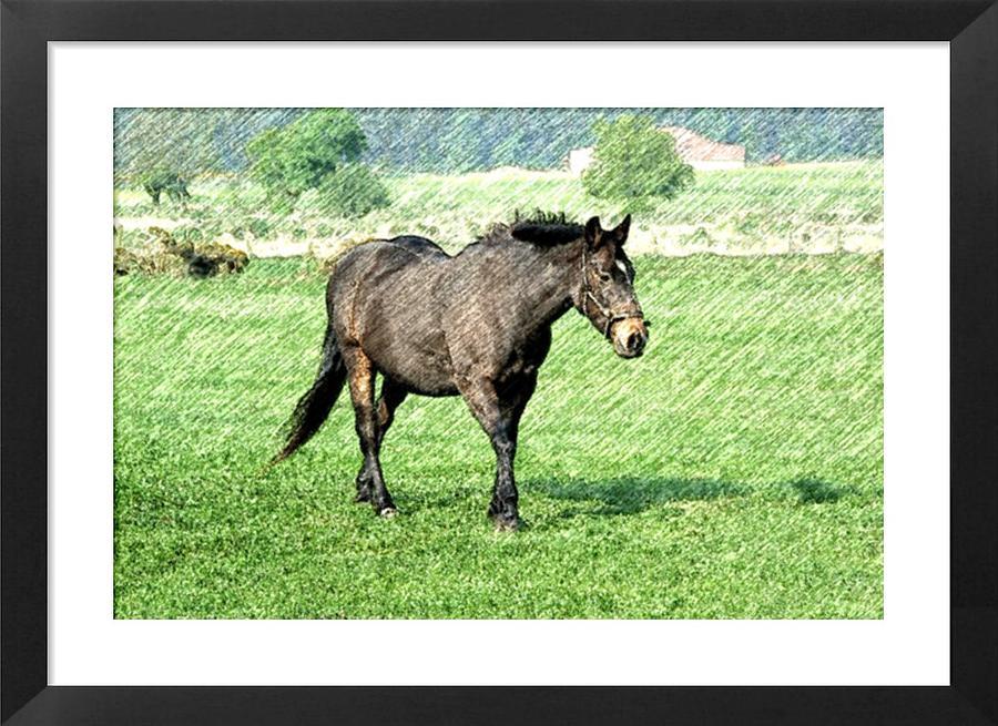 - grey-horse-paul-damian