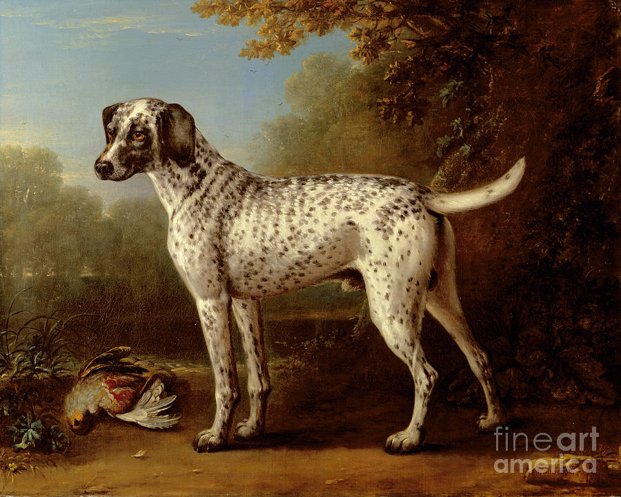 Grey Spotted Hound Painting