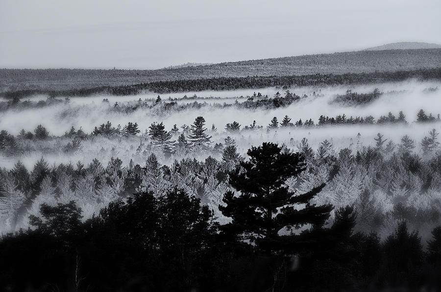 Ground Fog Photograph  - Ground Fog Fine Art Print