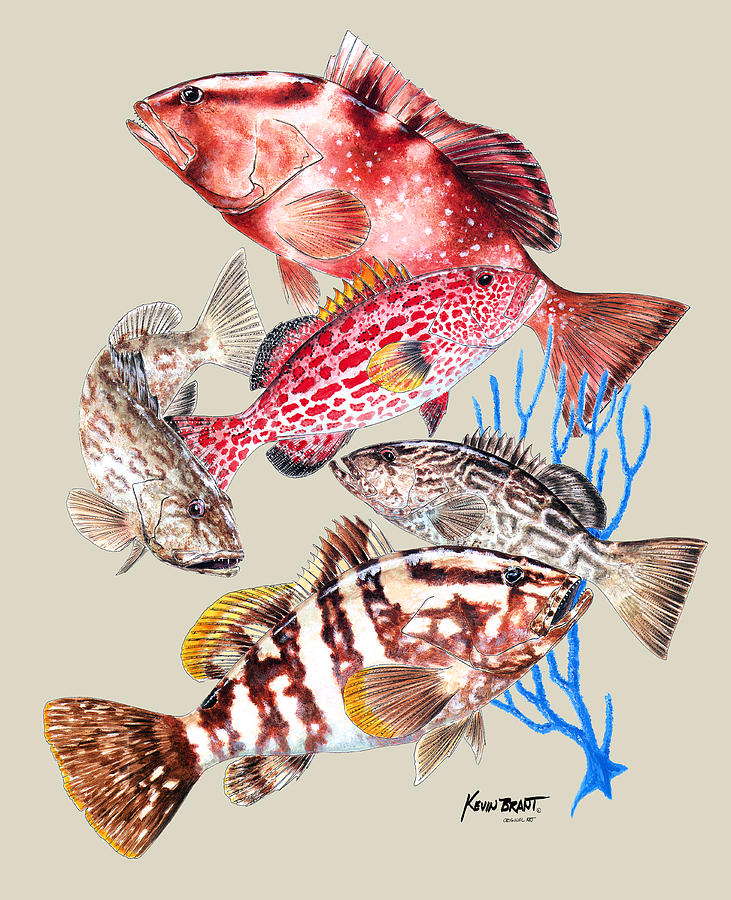 Grouper Montage Painting