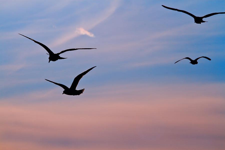 Gulls At Dusk Photograph