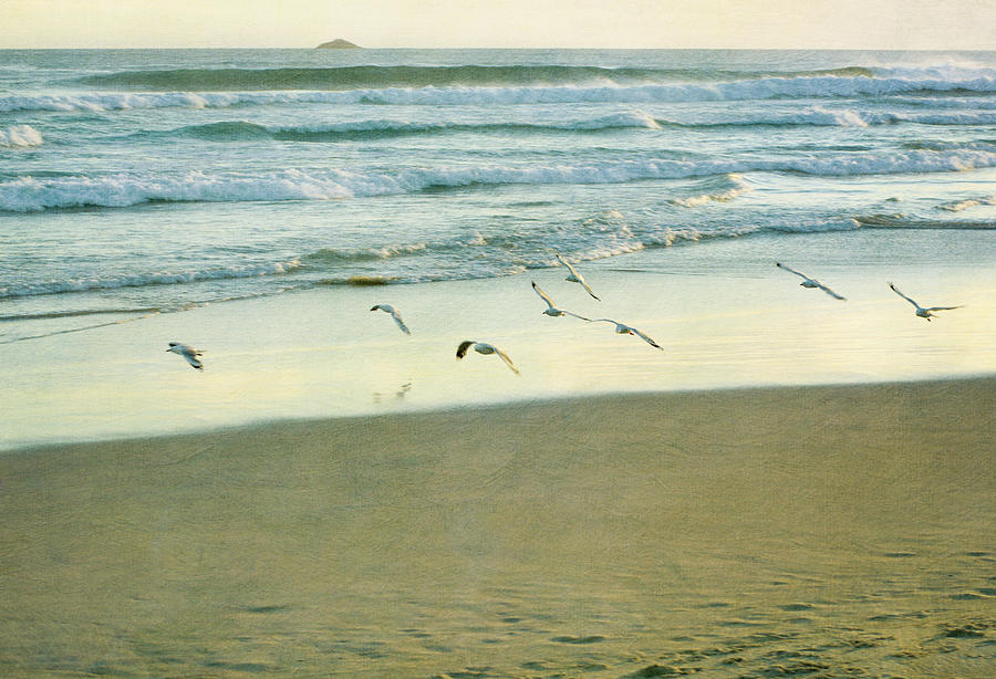 Horizontal Photograph - Gulls Flying by Jill Ferry