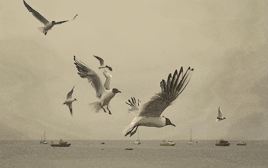 Sea Birds Photograph - Gulls by Linsey Williams