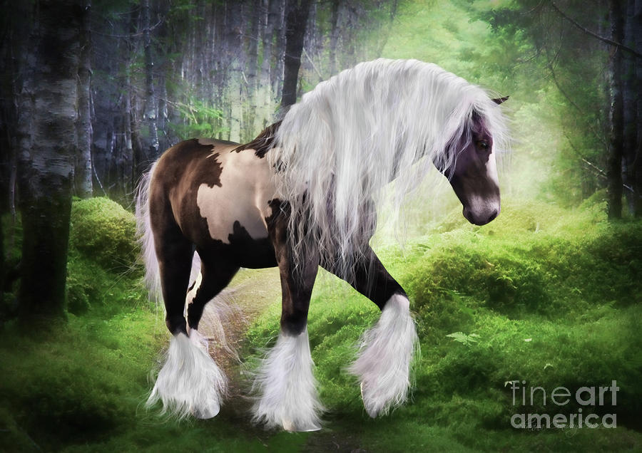 Gypsy Vanner Digital Art  - Gypsy Vanner Fine Art Print