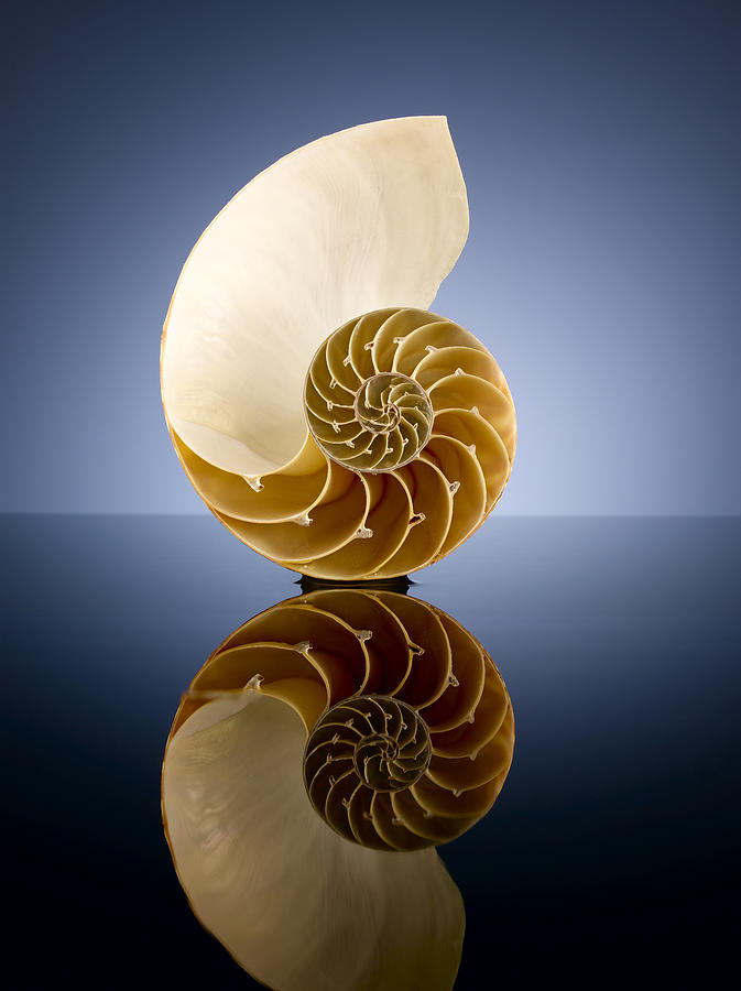 Half A Nautilus Shell In A Pool Of Water Photograph