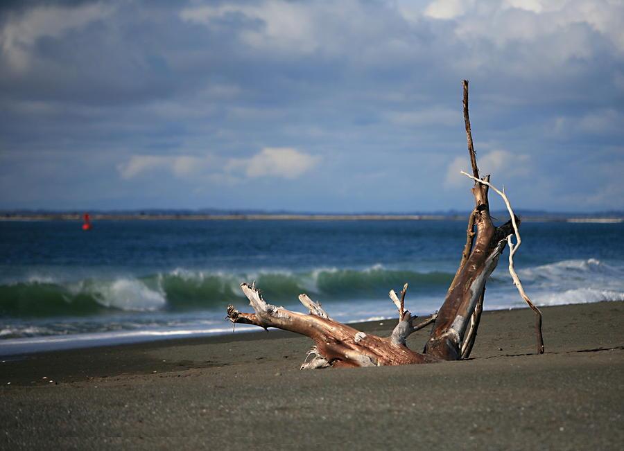 Halfmoon Bay Driftwood Photograph