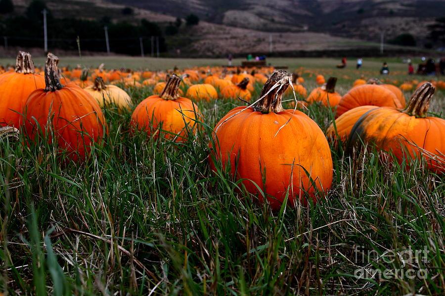 Halloween Pumpkin Patch 7d8405 Photograph