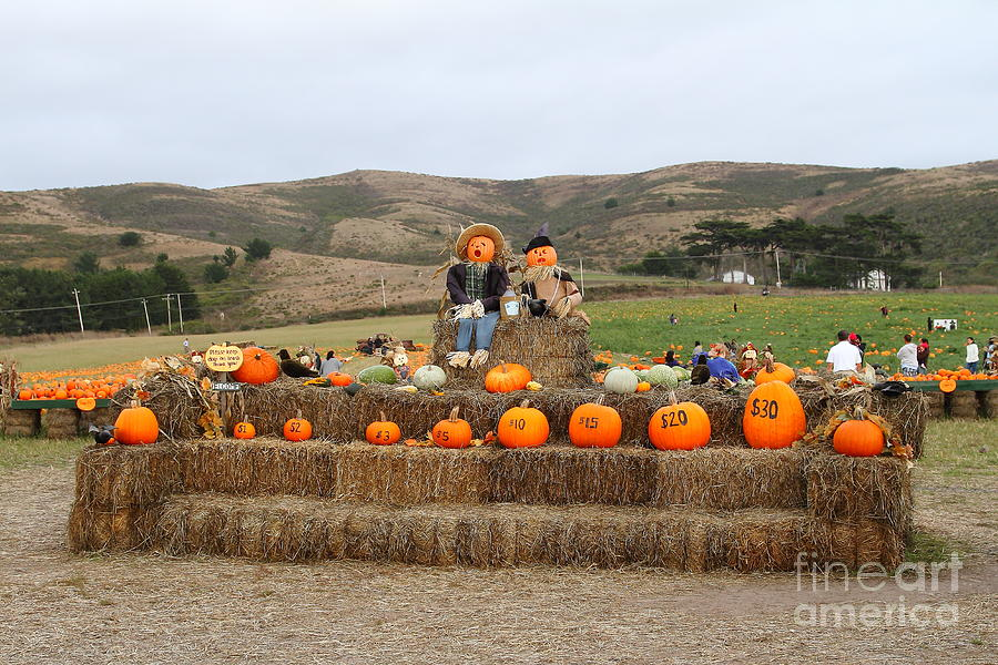 Halloween Pumpkin Patch 7d8478 Photograph