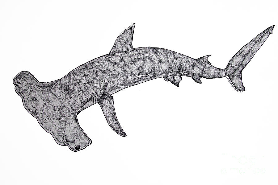 Hammer Head Shark Drawing