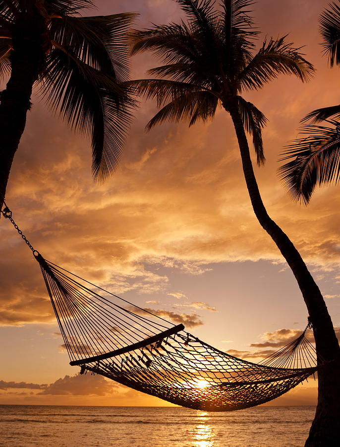 Hammock Between Palms II Photograph  - Hammock Between Palms II Fine Art Print